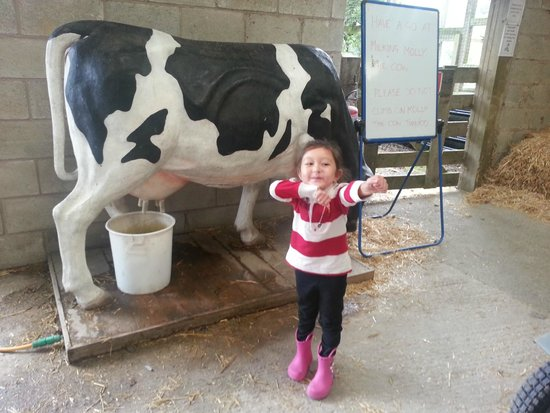 Bowland Wild Boar Park: moo cow