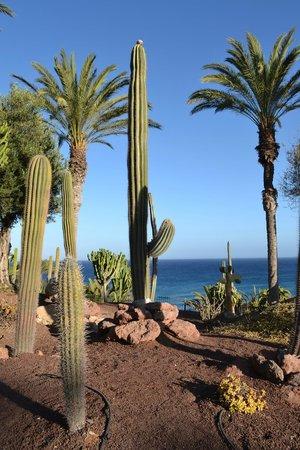 R2 Rio Calma Hotel & Spa & Conference: cactus