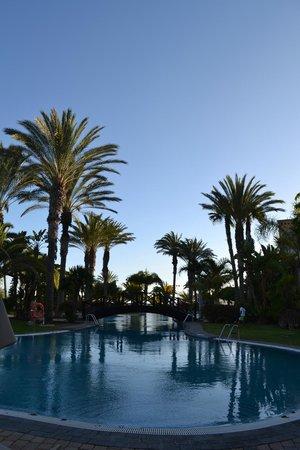 R2 Rio Calma Hotel & Spa & Conference: palmiers
