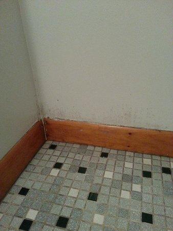 Hillside Motel: Mold forming on bathroom wall?