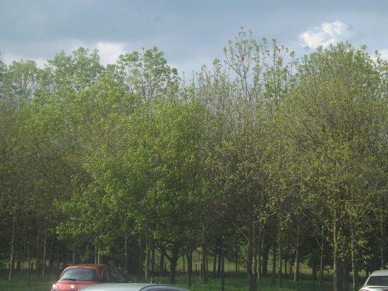 Innkeeper's Lodge Cramlington: view from ground floor room (over car park)