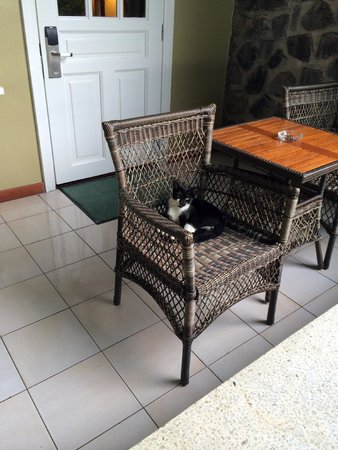 Sandals Halcyon Beach Resort: Cute kitten that we just saw sitting there but didn't bother us