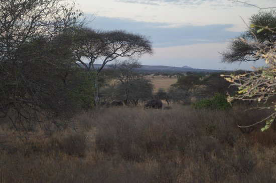 Oliver's Camp, Asilia Africa: elephants from our deck