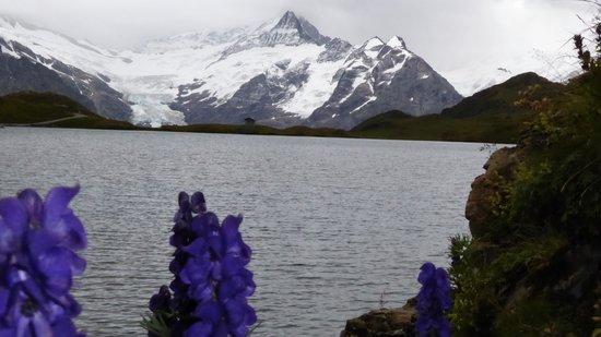 Bachalpsee: Lac bachalp