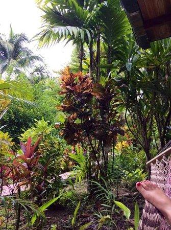 Falls Resort at Manuel Antonio: desde la habitacion 5