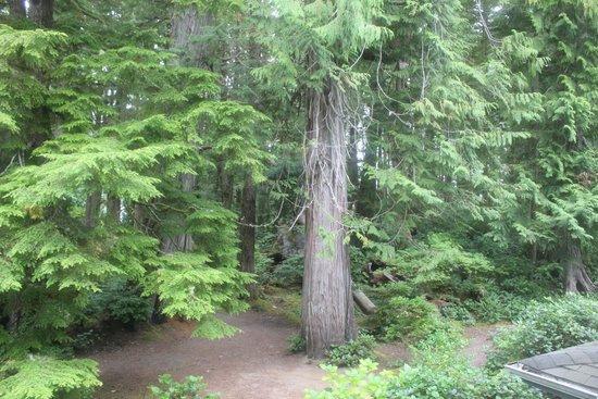Jamie's Rainforest Inn: Into the woods