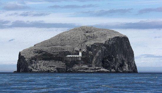 Scottish Seabird Centre: Bass Rock