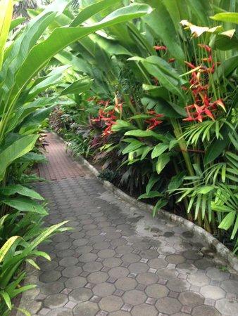 Smile House Resort: Garden oasis