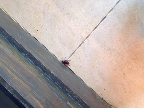 Roach at bali spark resort