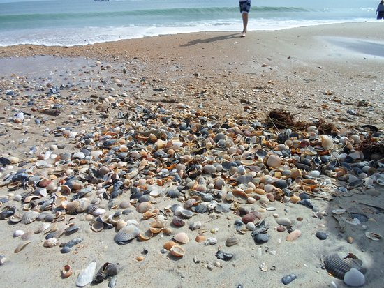 Crystal Coast Ecotours - Private Tours: Shells on Shackleford Banks