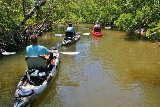 Mangrove Maniacs