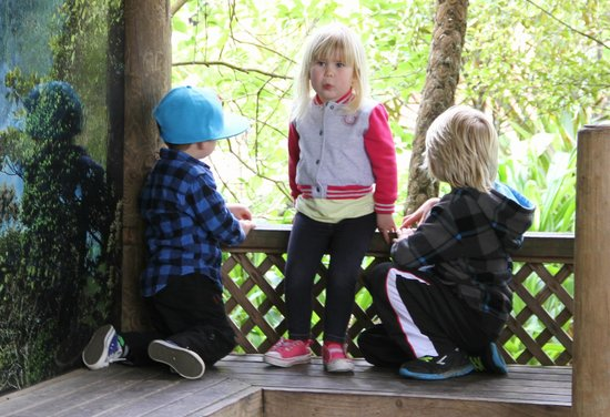 Auckland Zoo : my grandkids watching the spider monkeys