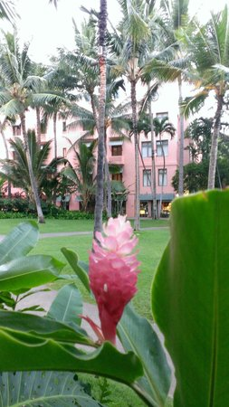 The Royal Hawaiian, a Luxury Collection Resort: The grounds