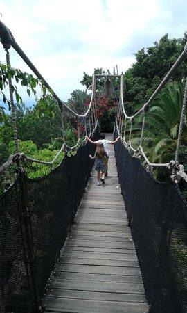 Park Las Aquilas Jungle Park : Uno de los puentes del Parque
