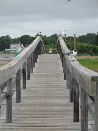 Boardwalk: The bridge