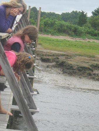 Boardwalk: Fishing for crabs on the bridge
