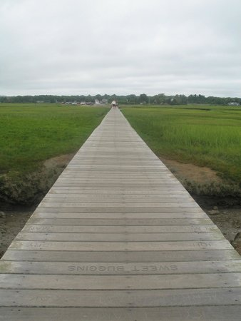 Boardwalk: The walk to the sea