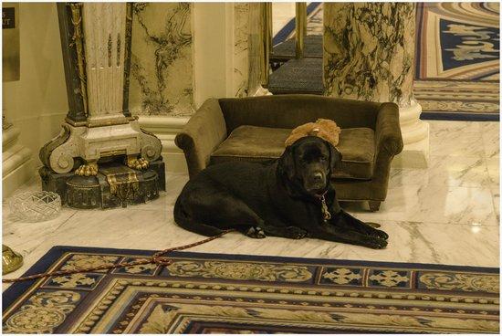 Fairmont Copley Plaza, Boston: Carley the Canine Mascot