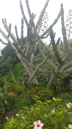 Caloura Hotel Resort: les jardins