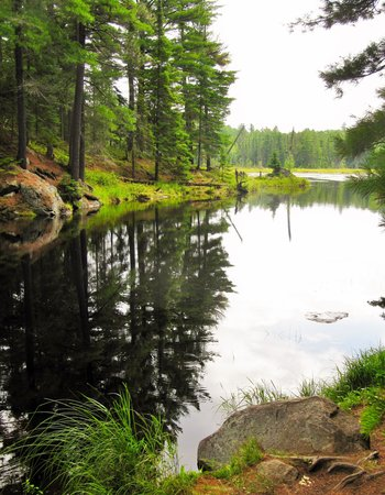 Beaver Pond Trail: Outlet of the lake