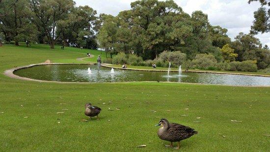 Pioneer Woman's Memorial: The ducks behind the scenes :-)