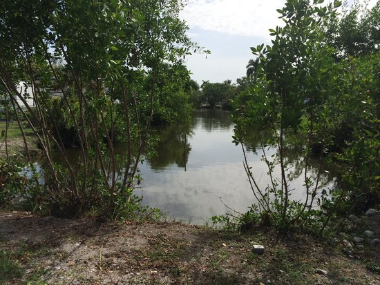 Periwinkle Park & Campground: Our back yard
