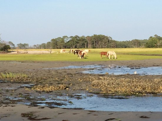 Daisey's Island Cruises: ponies on the island