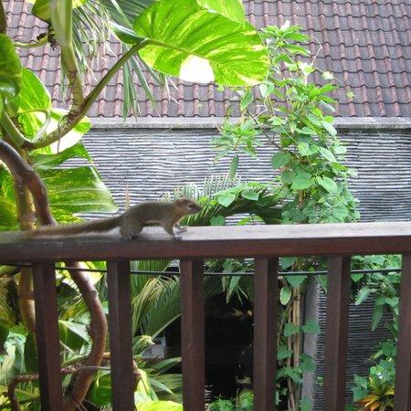 Alam KulKul Boutique Resort : 朝食の時にリス