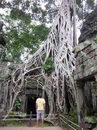 Ta Prohm : Inside temple
