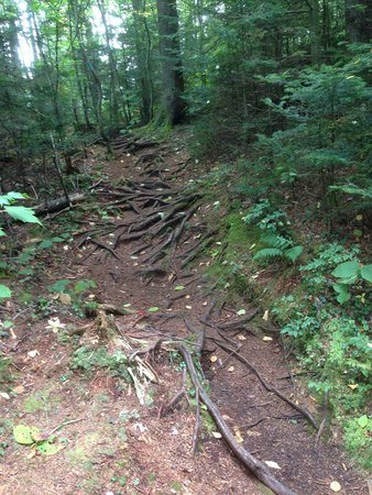 Woodford State Park: Root stairs.