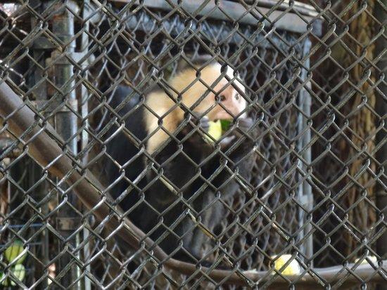 Jungle Island: monkey