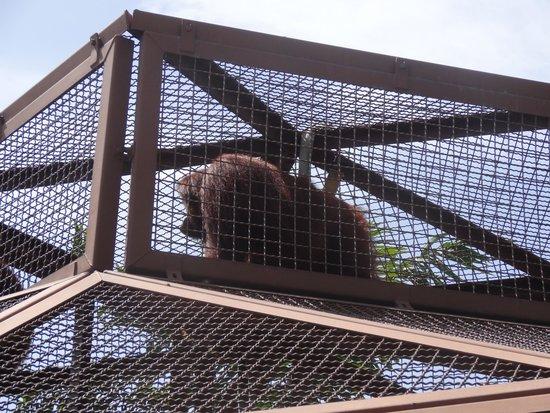 Jungle Island: top of orangutan cage