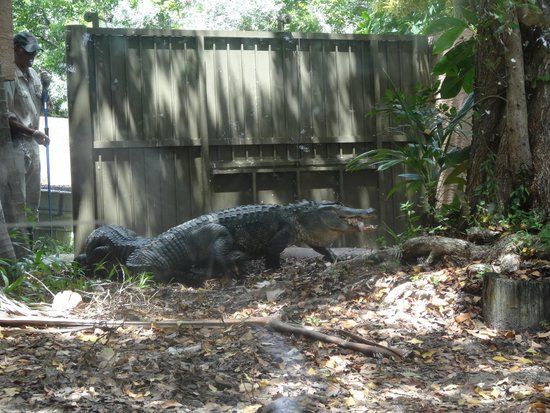 Jungle Island: 3 big gators in this small land area they also have a small water area