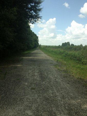 Paynes Prairie Preserve State Park: View along Cone's Dike trail.