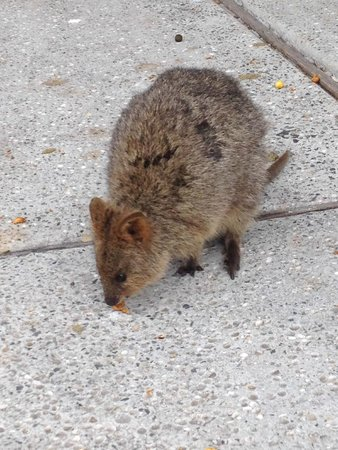 Rottnest Express: Locals were friendly...but came alive at night!!