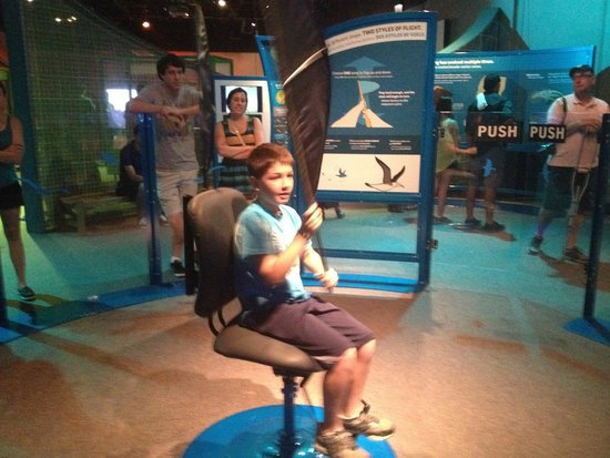 The Field Museum, Chicago, IL - Learning to fly