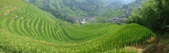 Long Sheng's Dragon Spine Rice Terraces: Number 2 terrace in Tiandou/Dazhai area