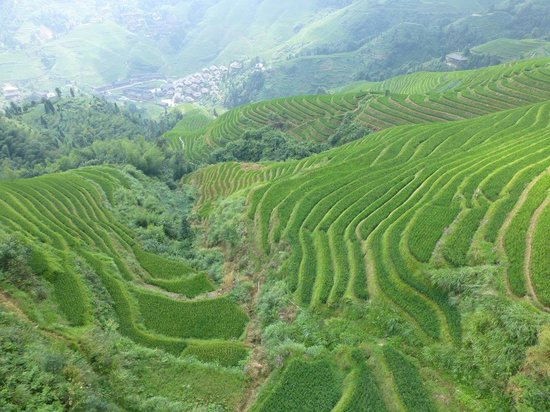 Long Sheng's Dragon Spine Rice Terraces: Number 3 terrace in Dazhai area from above (from the gondola)