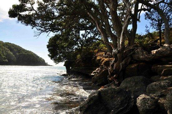 Goat Island Marine Reserve: Good weather