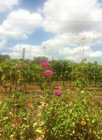 Dry Comal Creek Vineyards: View from the Vineyard