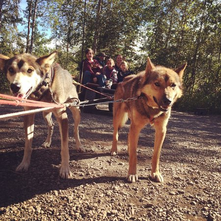 Iditarod Headquarters: Taking a sled dog ride