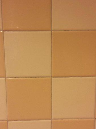 Loews Royal Pacific Resort at Universal Orlando : Mold on bathroom wall for 7 days
