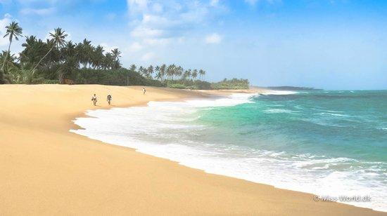 Coconut Island Cabanas and Restaurant: Marakolliya Beach