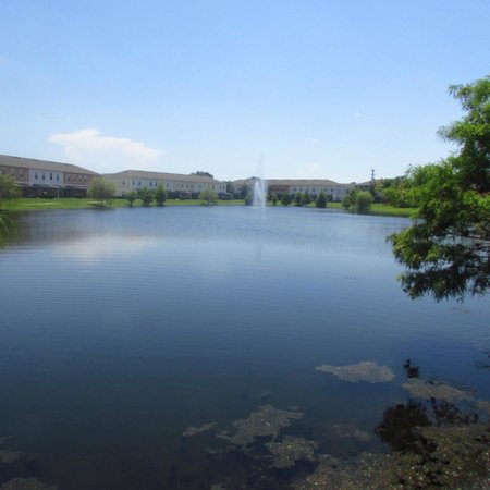 Coral Cay Resort : pond area