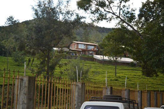 De Rock Jungle Living - Coonoor: View from tea plantation