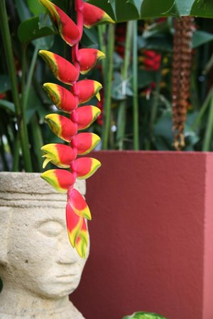 Lakeview Ecolodge: flowers from Kintamani