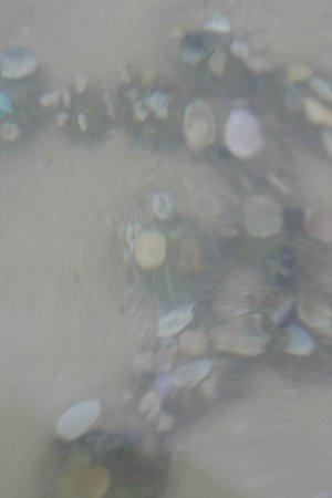 Samed Club : колония морских ежей