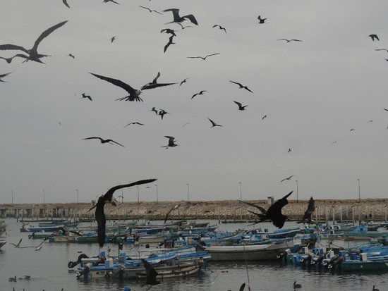 Salinas, Ecuador: Puerto pesquero de Anconcito