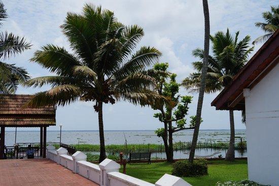 Abad Whispering Palms Lake Resort: Coconut Trees