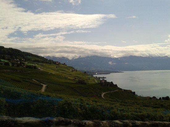 Hotel-Restaurant Prealpina: vinmarker og genevesøen